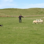 Durness Dog Trials (1)