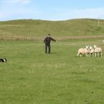 Durness Dog Trials (1)