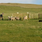 Durness Dog Trials (10)
