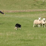 Durness Dog Trials (2)