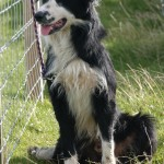 Durness Dog Trials (4)