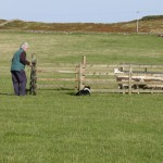 Durness Dog Trials (6)