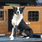 Durness Dog Trials (9)
