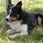 Durness Dog Trials (5)